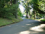 Yamhill Rd at Mt Tabor